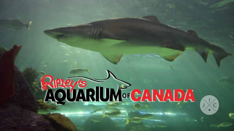 Under the Sea – Ripley's Aquarium of Canada