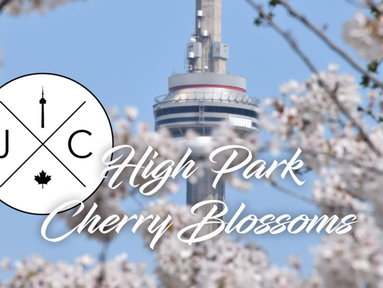 Toronto's High Park Cherry Blossoms